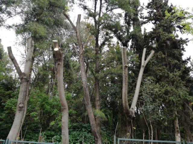 Ενημέρωση για τις εργασίες στο Άλσος Ευελπίδων
