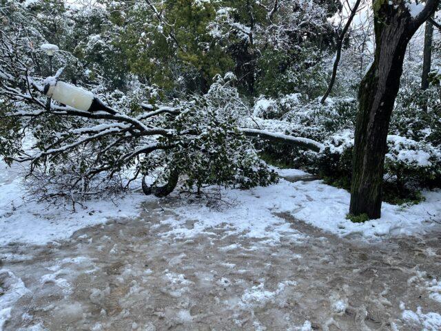 Το χιονισμένο Πάρκο και τα σπασμένα δένδρα
